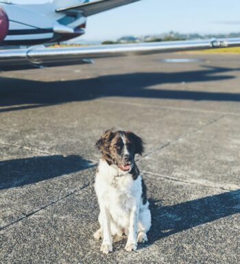 pets-at-the-cancun-airport